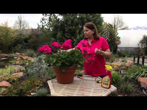 How to Remove Mold From a Garden Plant Naturally : Grow Guru