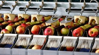 Crazy Food Processing Machines 2017   Apples