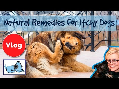 How to Cure Dogs Itchy Skin! 8 Natural Remedies for Itchy Dogs, Cure Skin Irritation!