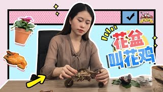 E15 Roast Chicken in Flowerpot? More delicious than you ever thought | Cooking in office