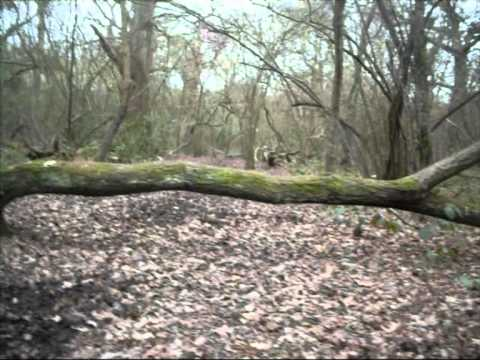 cross country jumping in petts wood woods video.wmv