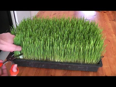 7 Micro Greens That Can be Harvested in few Days