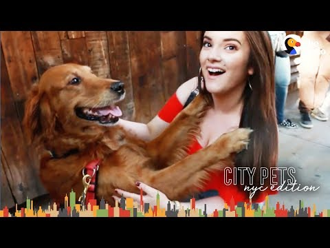 Dog Just Wants To Hug Everyone In NYC - LOUBOUTINA | The Dodo City Pets