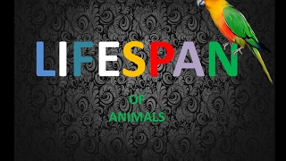 Download lifespan of living things/animals/birds Video