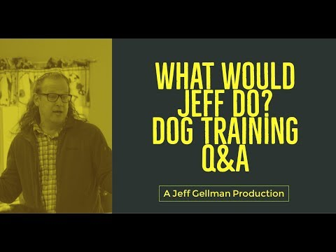 Stop a dog from jumping   Dog bites my hands   What Would Jeff Do? Dog Training Q&A #427