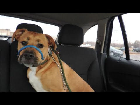 Fixing Dog Car Anxiety by Dog Whisperer BIG CHUCK MCBRIDE  - SafeCalm