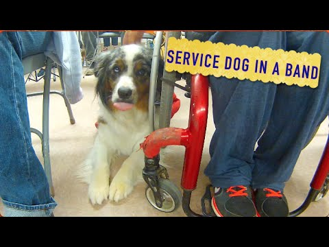 Service Dog In a Band