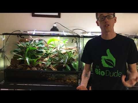 How to maintain your Terra Flora Bioactive Terrarium