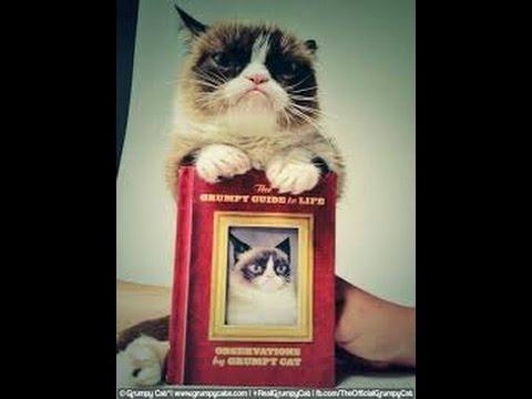 Grumpy cat book review