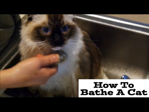 How To Bathe A Cat (Funny)