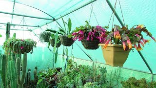 Polytunnel Heater Fail Horror With Freezing Temps Overnight -vlog