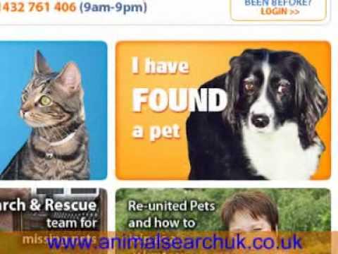 I have found a stray dog / someone's missing dog