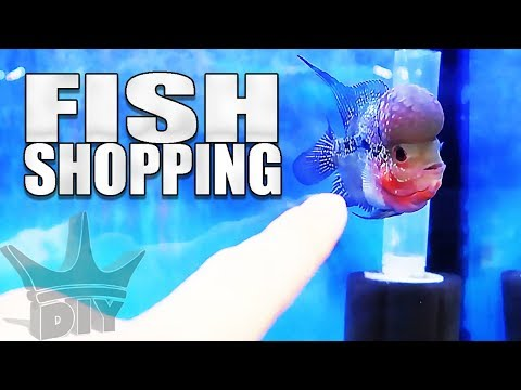 SHOPPING FOR NEW FISH!!!
