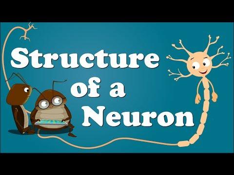Structure of a Neuron | It's AumSum Time