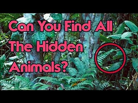 CAN YOU FIND THE HIDDEN OBJECT (98% FAIL) TRY IT 2017 - 2018