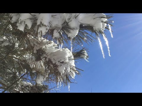 Winter in the Pines - Quiet Moments
