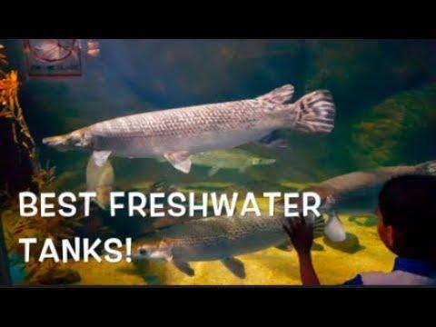 UnderWaterWorld Langkawi - AMAZING FRESHWATER EXHIBITS!