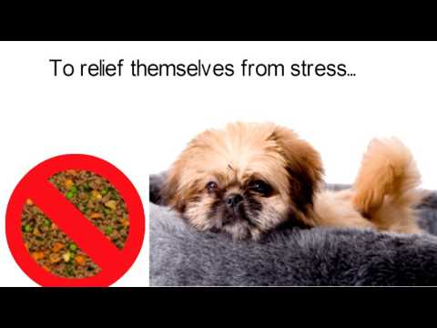 Important Signs Of Anxiety In Pekingese Dogs: Common Anxiety, Fear and Stress Signs In Pekingese Dog