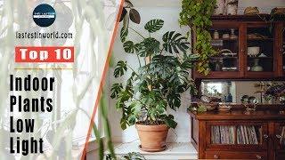 Top 10 Indoor Plants For Low Light