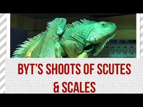 Backyard Tortoises Weekly Update: Shoots of Scutes and Scales episode 2