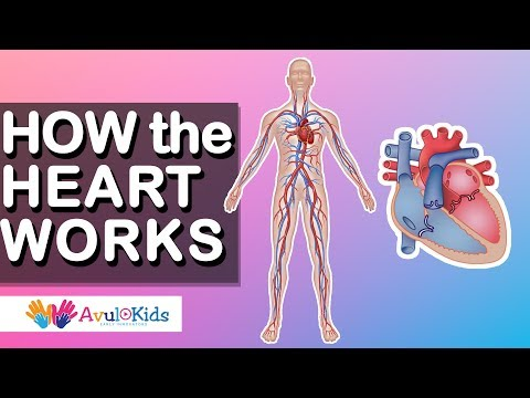 How heart works | Human body science for kids | Educational videos for kids
