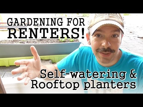 Urban Gardening Tips for Renters: Self-Watering Containers / Rooftop Terraces / Community Gardens