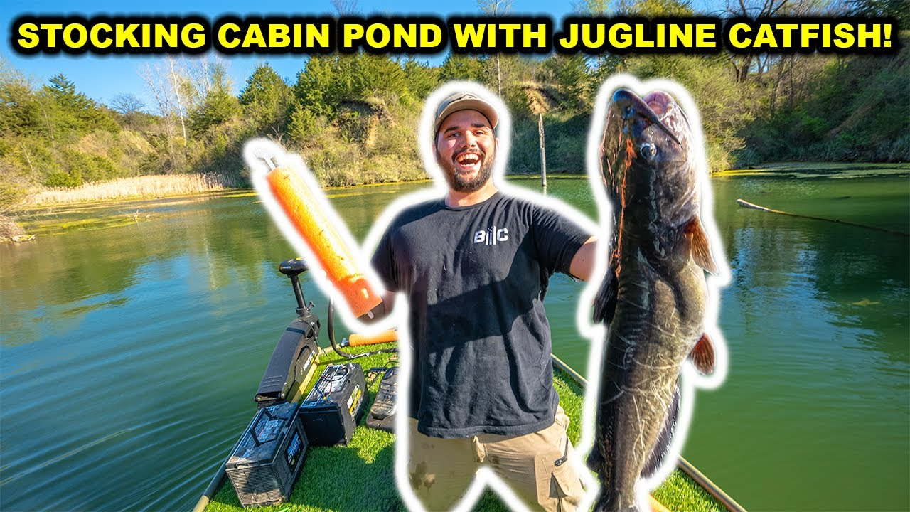 Catching BIG Catfish in BACKYARD POND with JUGS to STOCK Cabin Pond!!!