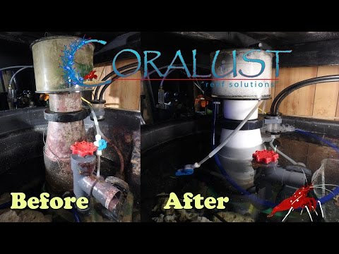 Coralust How to Clean Your Protein Skimmer
