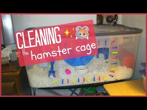 Cleaning the Bin Cage │Alexandriasanimals