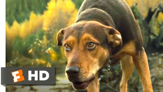 A Dog's Way Home (2018) - Hunted by Coyotes Scene (3/10)   Movieclips