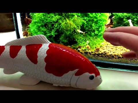 Dramatically Increase Cherry Shrimp and Crystal Red Shrimp Survival Rates 2016
