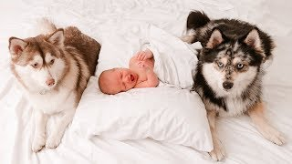Our Dogs Meet Our Newborn!