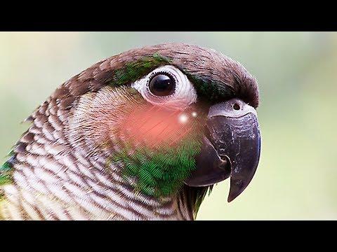 Erotic Birds