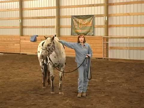 How to Introduce your Horse to a Training Stick