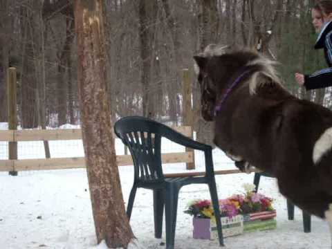 Teaching your horse to jump 'scary' objects