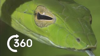 Costa Rican Jungle 360° - Planet Earth II - Behind The Scenes