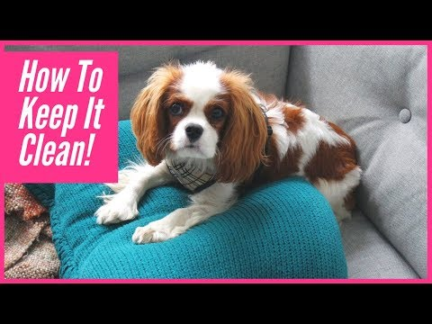 Dog Parents' Guide To Keeping Your Home Looking Clean & Smelling Fresh