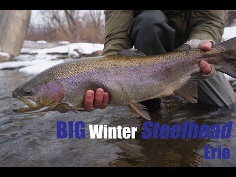 BIG winter steelhead - Erie