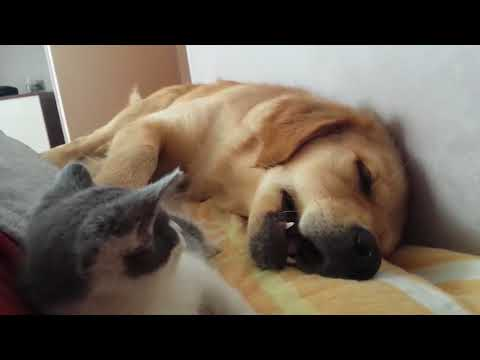 Kitten Playfully Bites Sleeping Dog - 959350-1