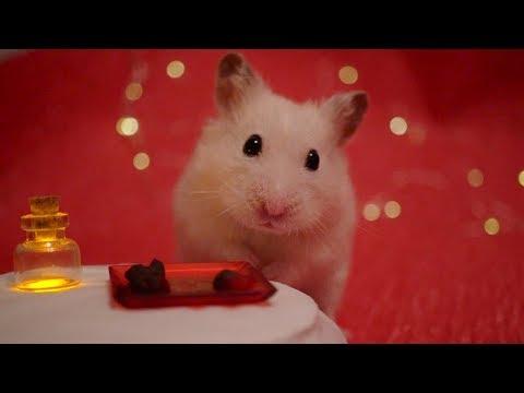 💝 Fine Dining Hamster 💝