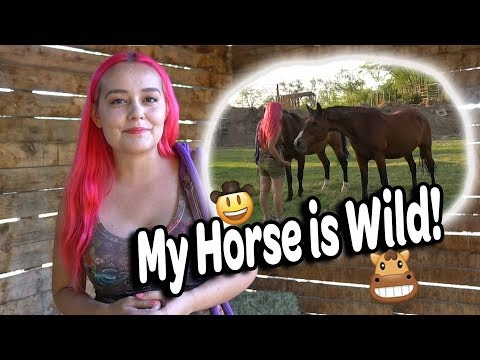 How I Catch My Horse | Wild Mustang on the Ranch
