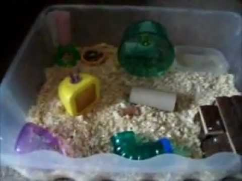 Home- made hamster cage: Hamster Bin Cage
