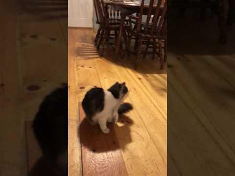 Cat stuck to sticky trap