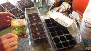 Great Herbs How To Start Cilantro Indoors Keep It Sowing Mfg 2014