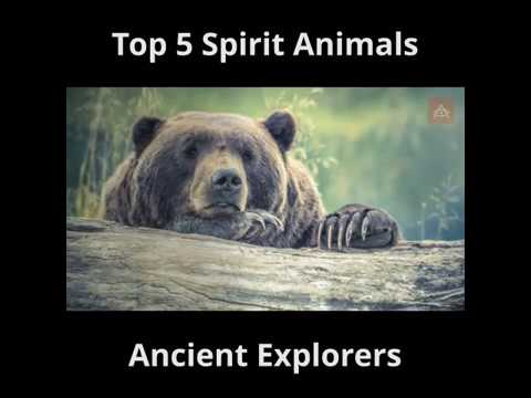 Did You Find Your Spirit Animal?