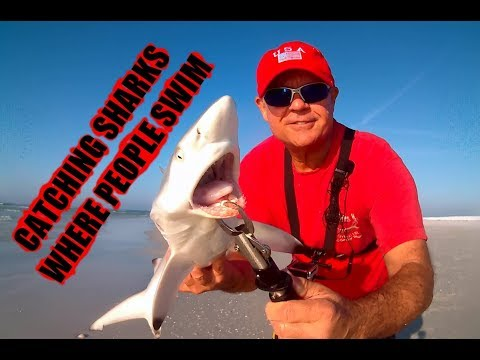 Catching Sharks Where People Swim Beach Fishing