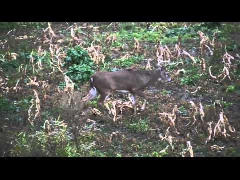 Whitetail Hunt 11 3 2011 Grand Valley - 400 Acres for Sale in Central Illinois
