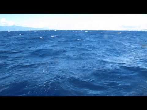 How to avoid feeling sea sick in Maui
