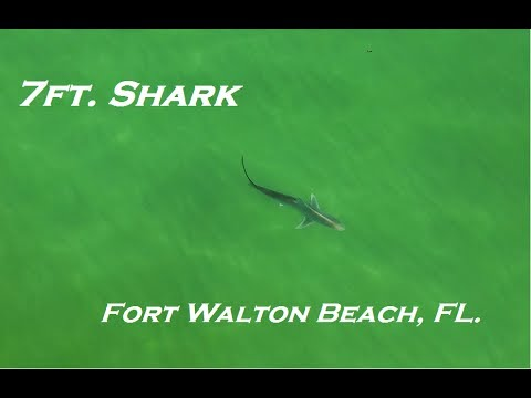 Shark Drone Video Captured In Florida