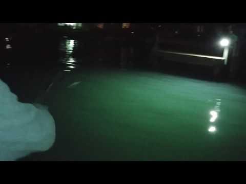 Big dock light redfish tampa bay